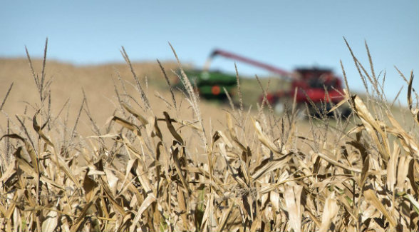 SOLD! 209 Acres of Iowa Farmland Goes For $18,000 Per Acre at Auction