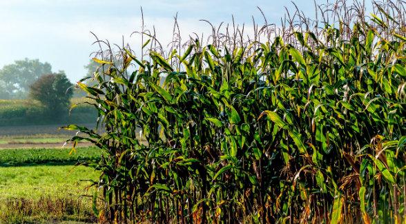 Tenth District Farmland Values Weaken | The Land Report