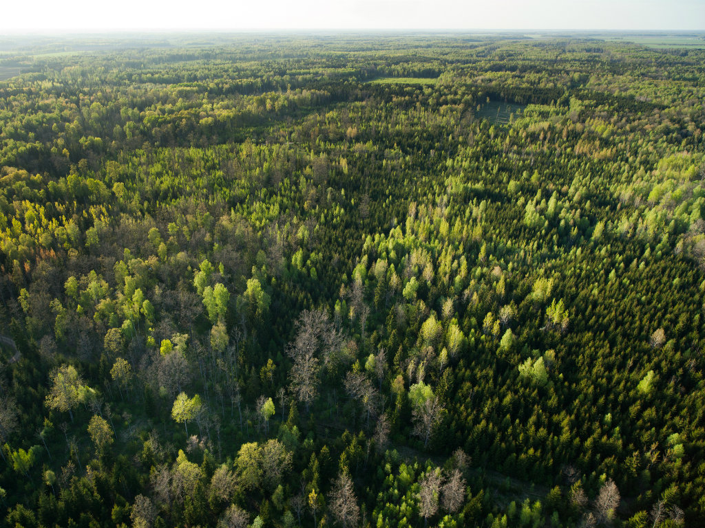 Land Report 100er Peter Buck Acquires 311,000 Acres of Maine Timberland